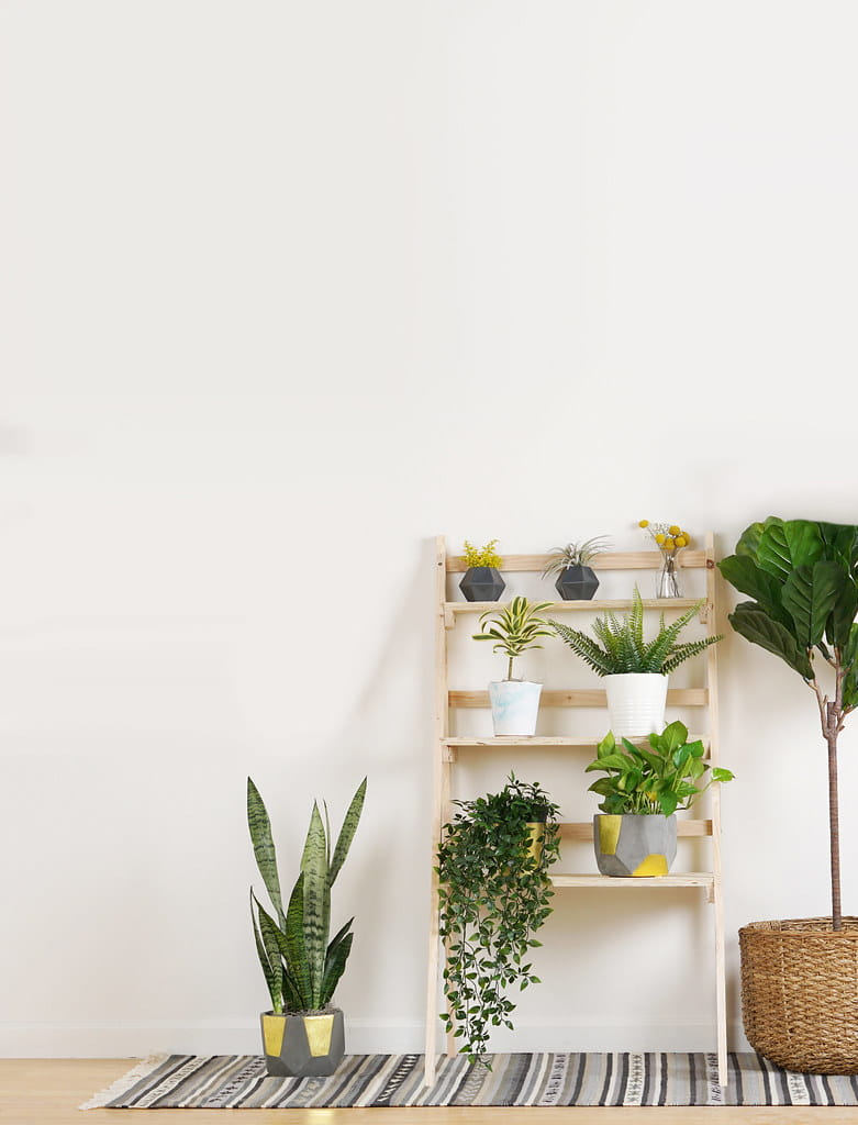 A simple and elegant plant stand with wooden panels for plant support polished natural.